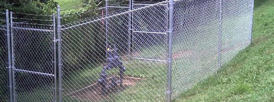 Chain-Link-Fence1-650x273