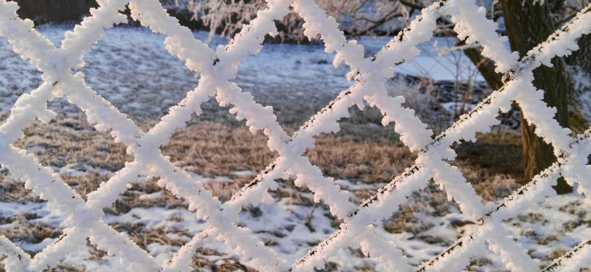 Metal Fence covered in ice